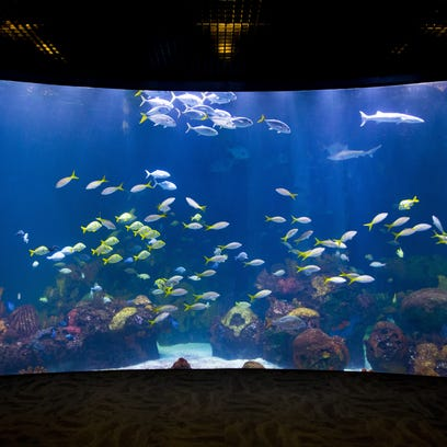 Johnny Morris: Here's when grand opening of WOW Museum and Aquarium will be