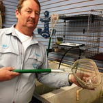 Bob Jury, at Anderson's Pro Bait in Port Huron, holds a dip net filled with wriggling emerald shiners.