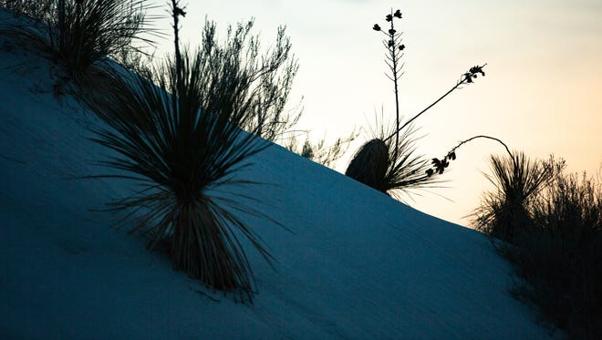 Native plants are pictured on Friday Jul7 27, 2018 for Full Moon Nights at White Sands National Monument.