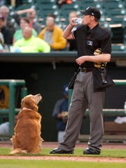 Jake the Diamond Dog watches an umpire drink the water Jake brought him between innings in 2016.