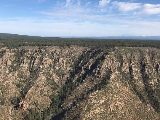 A healthy forest should have 100 trees or less per acre, but this part of the Mogollon Rim has 10 times that many. You can see the overgrowth for miles as a heavy line of green.