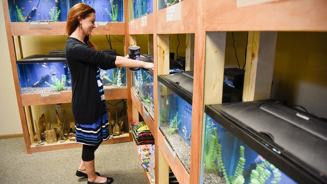 Lindsey Klein feeds the fish Wednesday, March 30, at her new store Art Fish & Soul Aquarium Store at 2237 Roosevelt Road. The store sells fresh and salt water fish, supplies, reptiles and art.