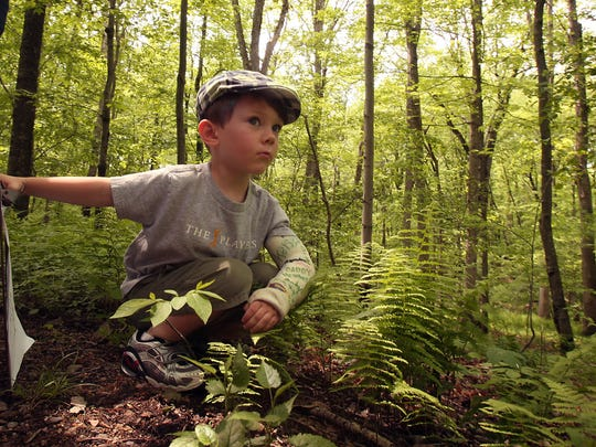 Take a hike at Pyramid Mountain. 3-year-old Colin Shally of Denville checks out some plants during Pyramid Mountain's hosted family walk.