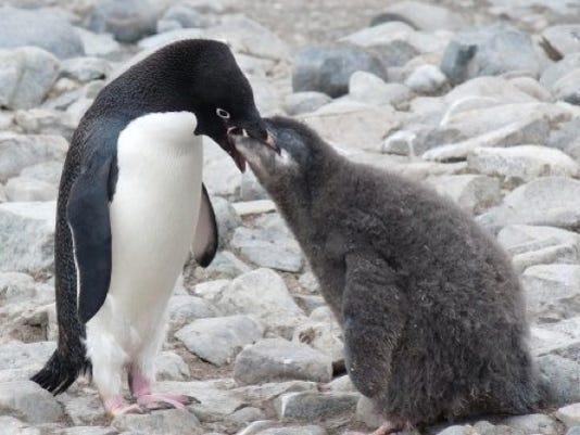 penguinandchickcrop.jpg