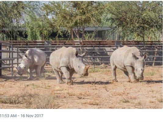 White-Rhinos.jpg