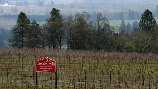 A field of Pinot Noir that belongs to the Sokol Blosser Winery in February 2015.