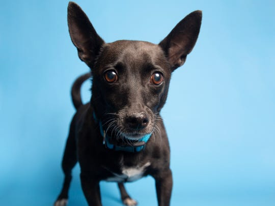 Walter is available for adoption at 9226 N. 13th Ave.