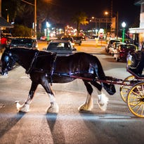 Holiday horse-drawn carriage rides return to Stuart