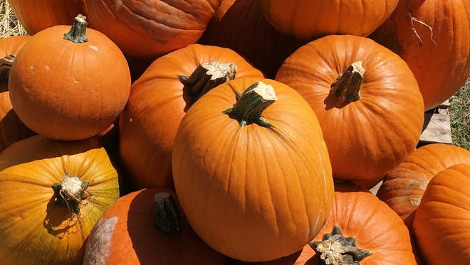 Pumpkin patch sales are popping up around the state as growers hope to complete harvest by mid-October.