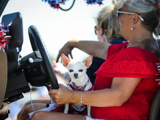 A dog rides on a lap during the Fourth of July parade