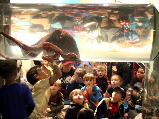 2014 FILE A giant pacific octopus  amazes a children's