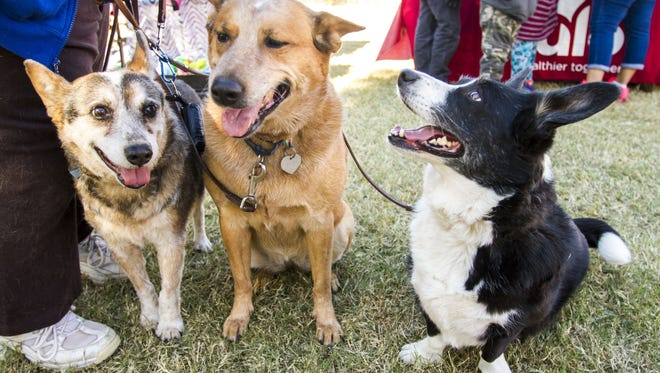 Gwen Oswood attends the Doggie Street Festival with her dogs Wild, Diamond Dancer and Lady Luck at Steele Indian School Park in Phoenix on Saturday Nov. 28, 2015. The event focused on promoting pet adoptions and celebrating pets.