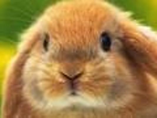 635632143336469241-bunny