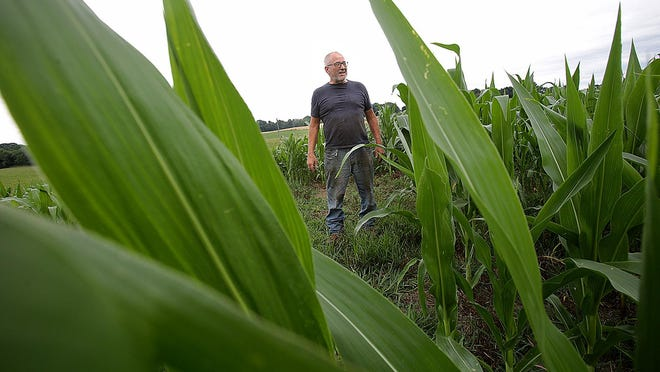 Farmer Blake Brenner, who operates Bingo Farm in the 23000 block of Lincoln Street in Tuscarawas Township, talks Tuesday afternoon about his corn crop, which could drop 5% to 20% because of a lack of measurable rainfall the past four weeks.