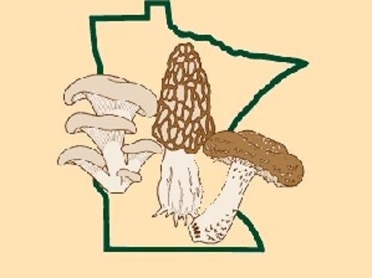 0723 mushroom.jpg