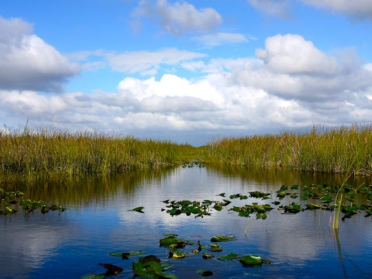 Everglades National Park: This subtropical wilderness in Southern Florida teems with wildlife, including more than 360 bird species, deer, river otters, manatees and alligators. You'll see these animals as you hike Everglades National Park's trails or explore the area by boat.