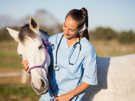 No job has become dominated by women faster than veterinarians.