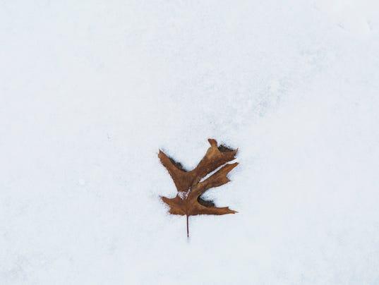 snowfall15.jpg