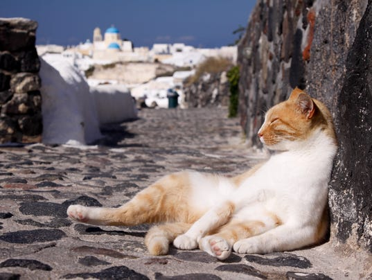 Stray cat in Oia on Santorini, Greece