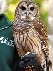 A barred owl at the Alabama Wildlife Center in 2009.
