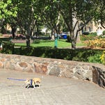 Mr. Bogart, a 9-year-old Chihuahua, scampers across the central square in downtown Sonoma.