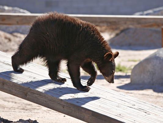 Wildlife World Zoo, Aquarium & Safari Park expansion
