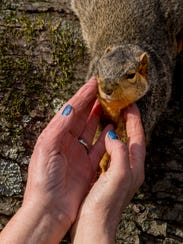 Getting an itch scratched is a common occurrence for Baby, a squirrel Cindy Dye of Oakland City, Ind., rescued and raised from infancy. The squirrel has left the Dye home for its own condo in an old maple tree, but still loves attention from his foster mom.