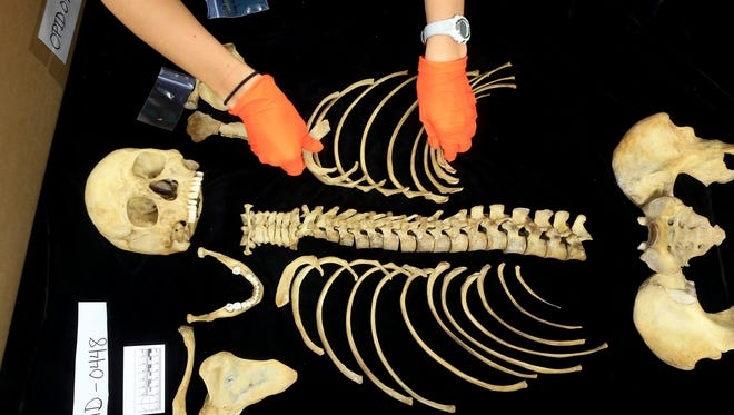GABE HERNANDEZ/CALLER-TIMESBrittany McClain collects the bones of a migrant that was pulled out from the Brooks County Cemetery after analyzing and documenting Thursday June 17, 2015 at the Texas State University forensics lab in San Marcos. Student volunteers from Indianapolis, New York and Ohio have spent a few weeks helping forensic anthropologists at Texas State University process the backlog of unidentified migrant bodies.
