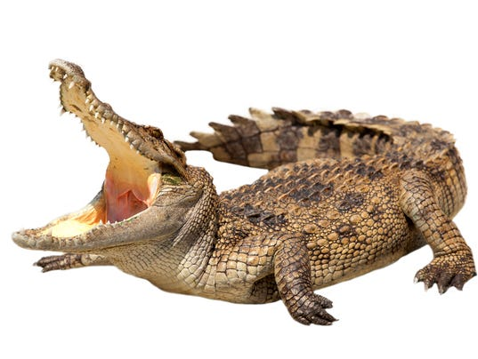 Crocodile Island Beach State Park