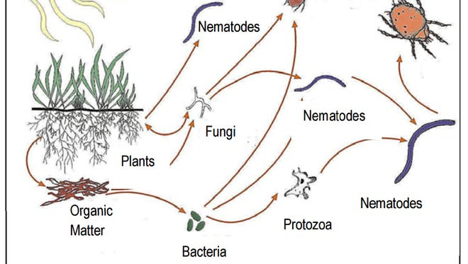 Soil is home to many types and sizes of living organisms.