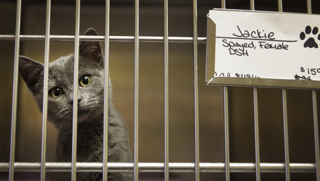 This kitten was available for adoption at Scottsville Animal Adoptions in 2010.