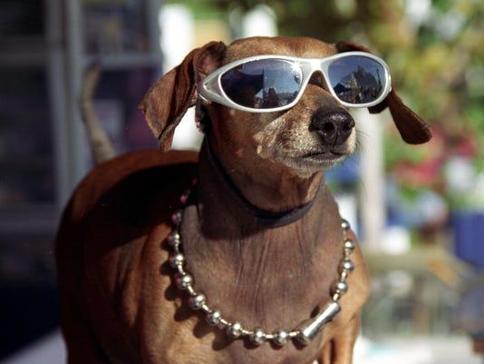 sparks marina fourth dog