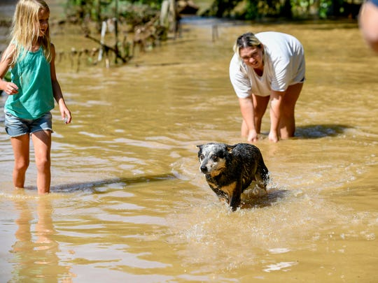 Maggie, the Kelley's dog, emerges from the flood waters after swimming back from her family's trailer in the morning hours after flash floods swept through low lands and creek beds at Swink Road in Medon, Tenn., Monday, July 16, 2018.