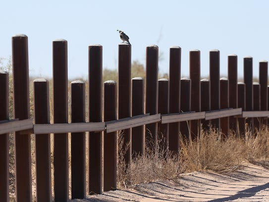 A quail stands atop the border vehicle barrier just