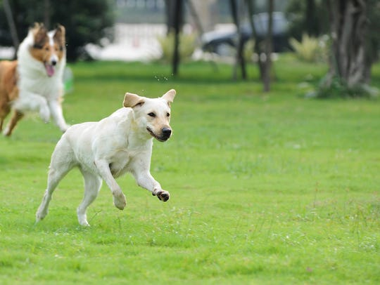 Let your dogs run free at one of the many dog parks
