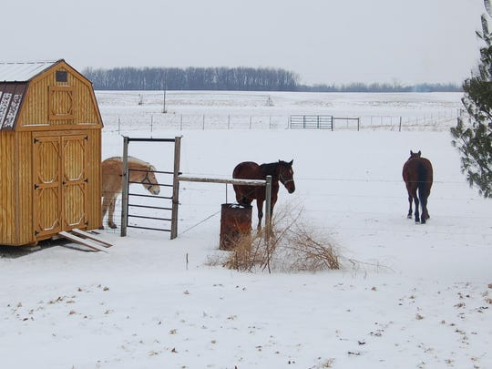 Former race horses and a work horse spend some time outside the barn.