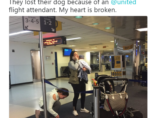 United: Dog dies after flight attendant forced it into