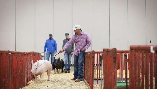 Mike McCoy guides his daughter's pig, Maya.