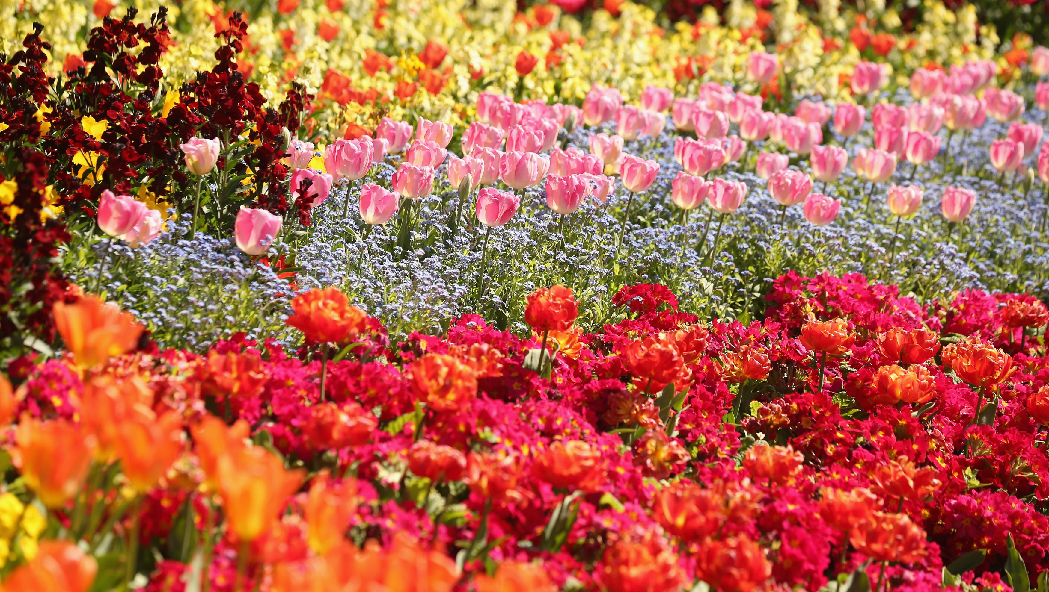 MAY FLOWERS Stock up Extravaganza