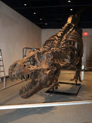 A grand opening celebration for an exhibition featuring this model of Stan the T. rex begins at 11 a.m. Saturday at the Farmington Museum at Gateway Park.