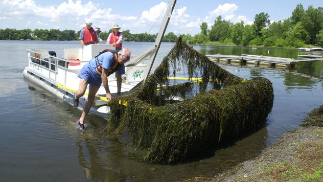 Milfoil harvesting, pictured here in Pelots Bay in North Hero, Vermont, is one treatment option for Eurasian watermilfoil, a long, feathery plant  grows up from the bottom of lakes and ponds to form a dense, slimy mat on the water's surface.