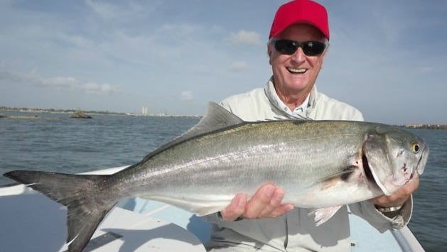 Big bluefish, like this one caught last year in Fort Pierce by Wayne Mills aboard Y-B Normal charters, are moving through the Indian River Lagoon.