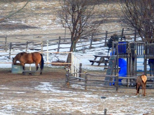A horse doesn't seem to mind sharing with an elk north of Ruidoso.