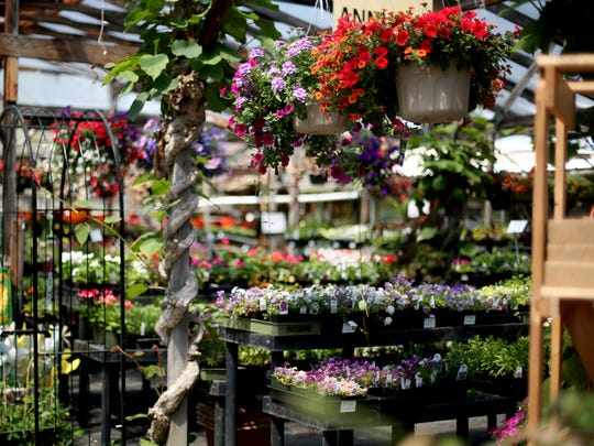 13th Street Nursery still has plenty of plants, even with a closing possible this year.