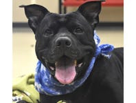 Meet the Dog of the Week