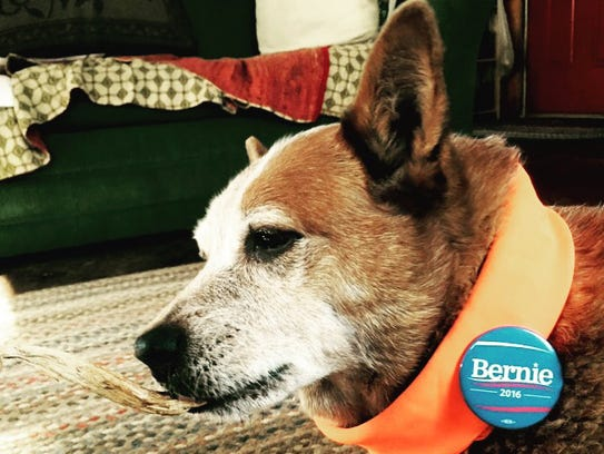 Akuna is a 10-year-old Australian cattle dog. She lives