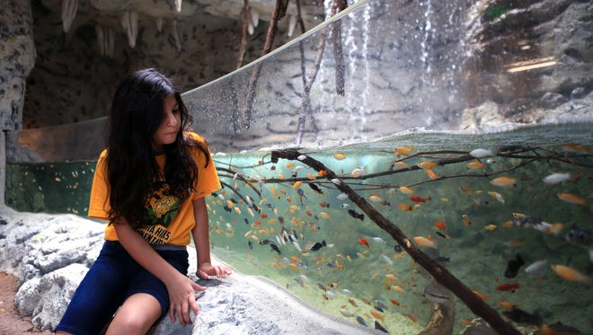 Hicks Elementary School student Sarah Salinas, 9, gets a sneak peak of the Caribbean Journey expansion at the Texas State Aquarium on Wednesday, May 4, 2017. The expansion, which opens Saturday, May 13, brings Mexico's Sian Ka'an Biosphere and its 300 species of wildlife to the aquarium.