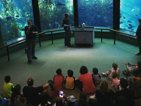 Makana captivates her audience at the Monterey Bay Aquarium. The presentation places emphasis on the reduction of single-use plastic items like straws, water bottles, and, of course, bags.