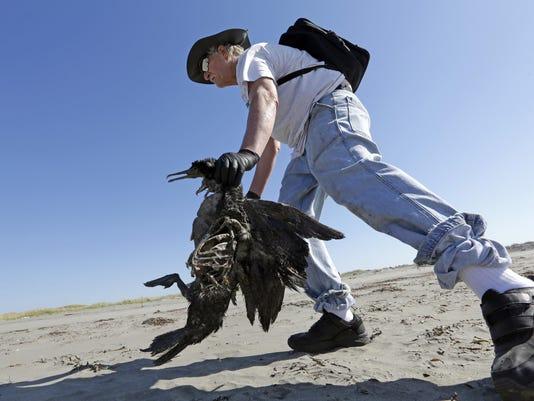 Dead Bird Patrol