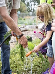 Michael Dalton, left, holds a hose for McKenna Davison, 6, as she washes a carrot she picked at the Westside Orchard Garden on Tuesday. Other vegetables picked include lettuce, radishes and zucchini.